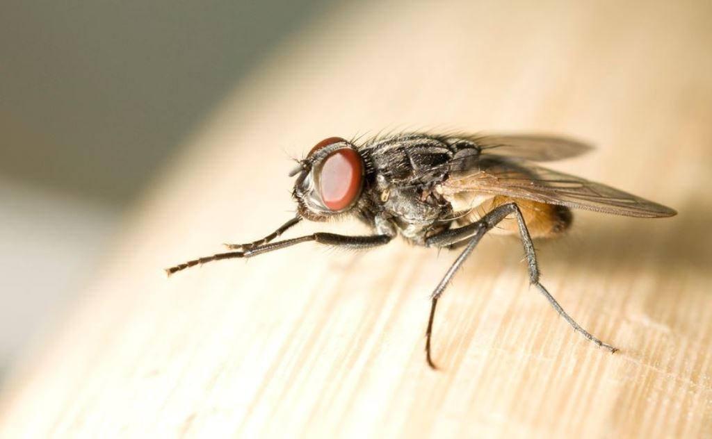 Pragas e doenças de insetos podem aumentar com alteração climática