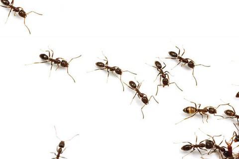 Calor favorece a reprodução de insetos
